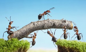 travail-collaboratif-fourmis